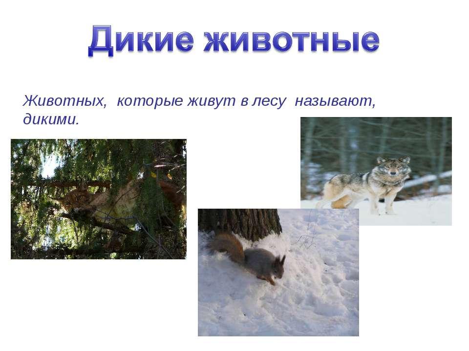 Животных, которые живут в лесу называют, дикими.