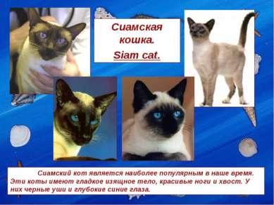 Сиамская кошка. Siam cat. Сиамский кот является наиболее популярным в наше вр...