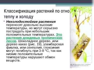 Классификация растений по отношению к теплу и холоду Нехолодостойкие растения...