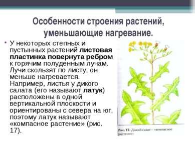 Особенности строения растений, уменьшающие нагревание. У некоторых степных и ...