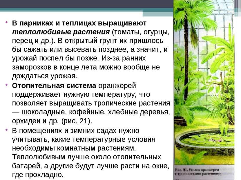 В парниках и теплицах выращивают теплолюбивые растения (томаты, огурцы, перец...