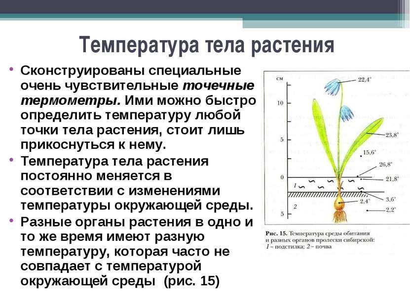 Температура тела растения Сконструированы специальные очень чувствительные то...