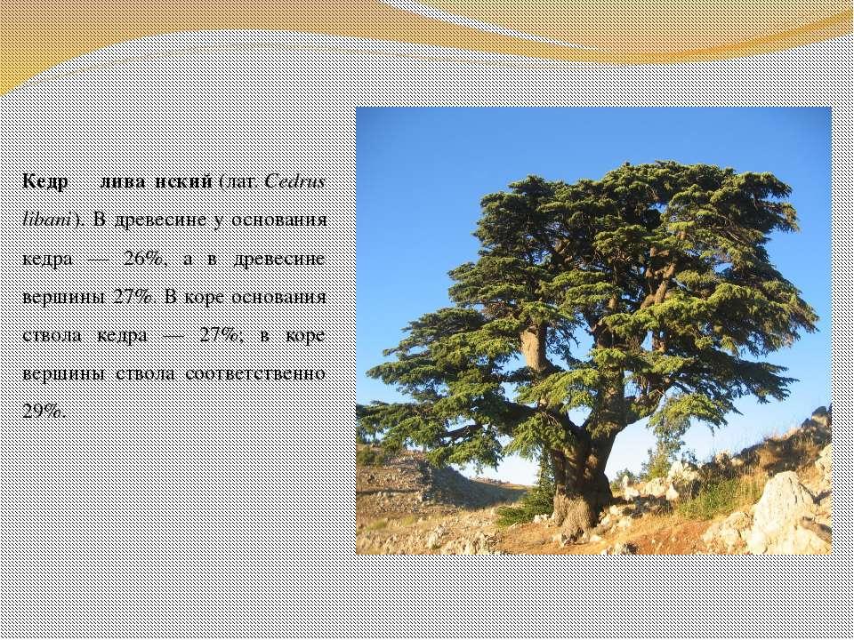 Кедр лива нский(лат.Cedrus libani). В древесине у основания кедра — 26%, а ...