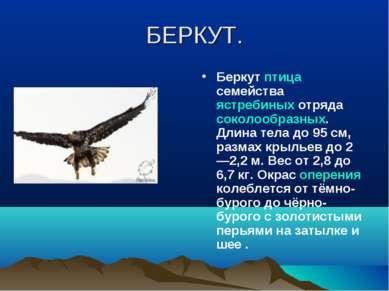 БЕРКУТ. Беркут птица семейства ястребиных отряда соколообразных. Длина тела д...
