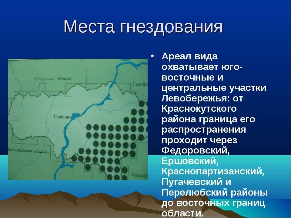 Места гнездования Ареал вида охватывает юго-восточные и центральные участки Л...