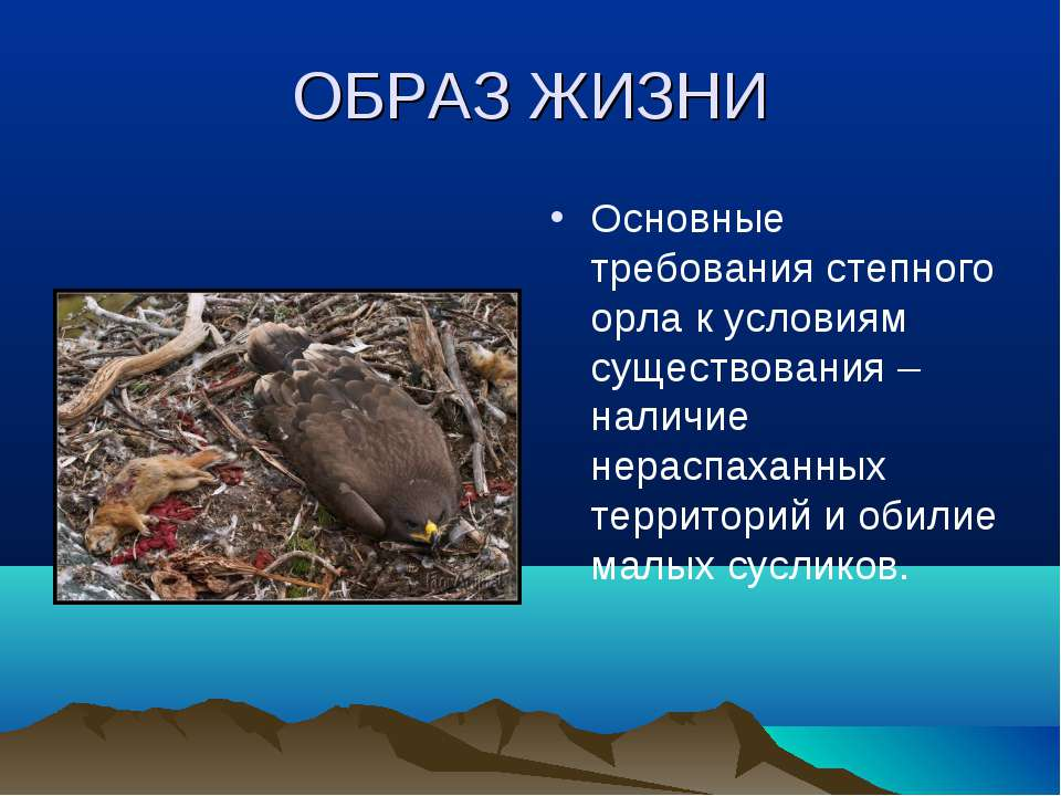 ОБРАЗ ЖИЗНИ Основные требования степного орла к условиям существования – нали...