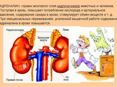 АДРЕНАЛИН, гормон мозгового слоя надпочечников животных и человека. Поступая ...