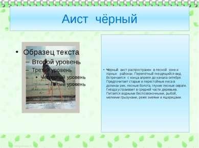 Аист чёрный Чёрный аист распространен в лесной зоне и горных районах. Перелёт...