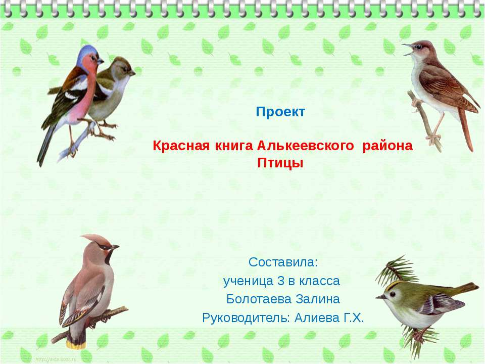 Проект Красная книга Алькеевского района Птицы Составила: ученица 3 в класса ...