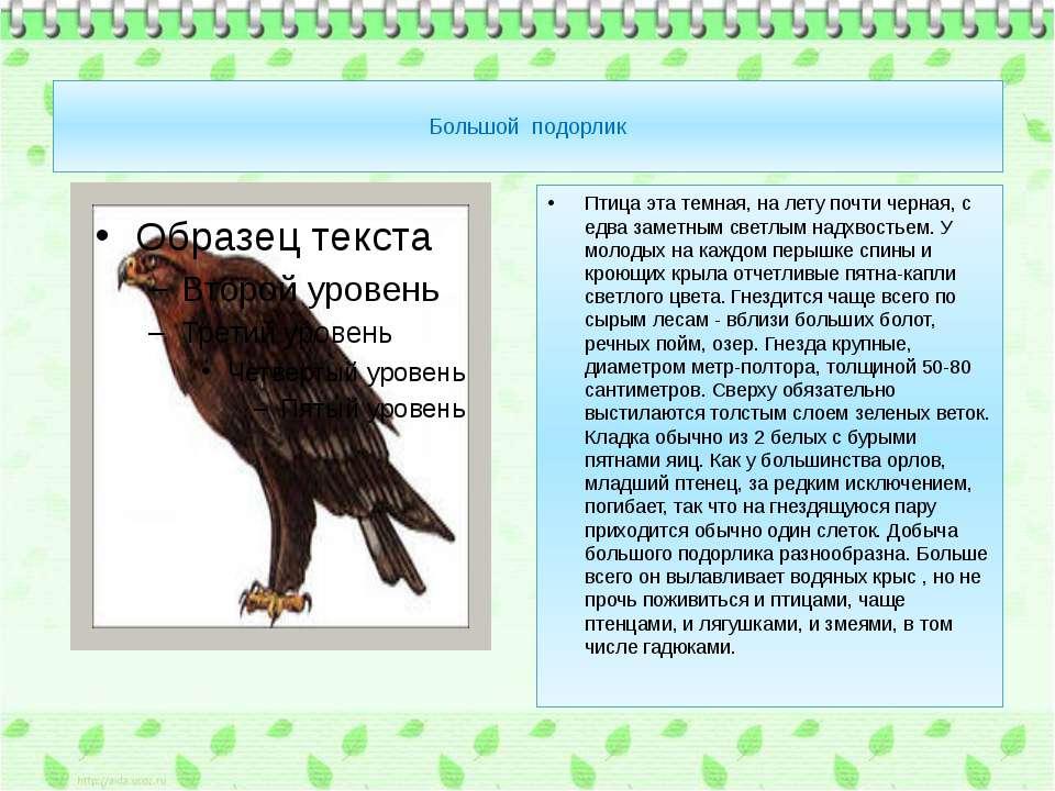 Большой подорлик Птица эта темная, на лету почти черная, с едва заметным свет...