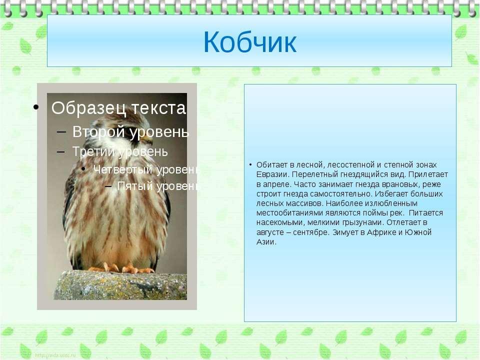 Кобчик Обитает в лесной, лесостепной и степной зонах Евразии. Перелетный гнез...