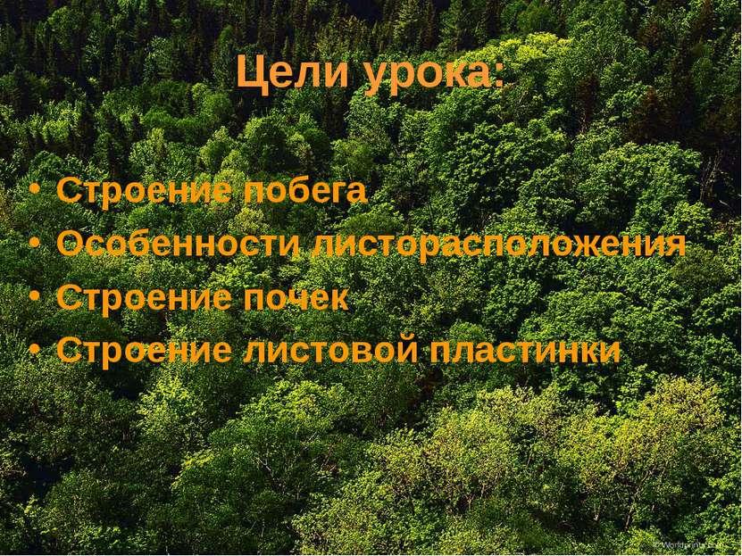Цели урока: Строение побега Особенности листорасположения Строение почек Стро...