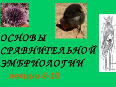 ОСНОВЫ СРАВНИТЕЛЬНОЙ ЭМБРИОЛОГИИ лекции 6-10