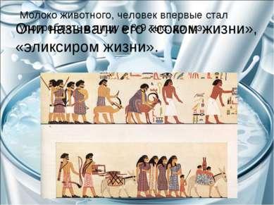 Молоко животного, человек впервые стал употреблять в пищу в 8-9 тыс. до н.э. ...