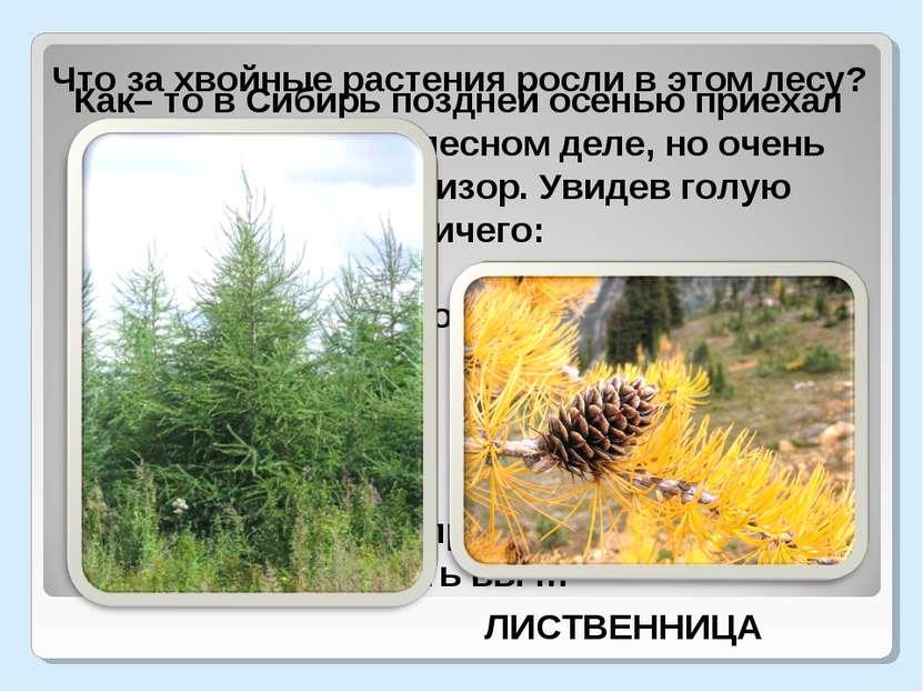 Как– то в Сибирь поздней осенью приехал малосведующий в лесном деле, но очень...
