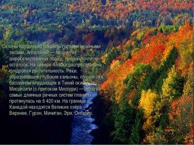 Склоны Кордильер покрыты густыми хвойными лесами, Аппалачей — лесами из широк...