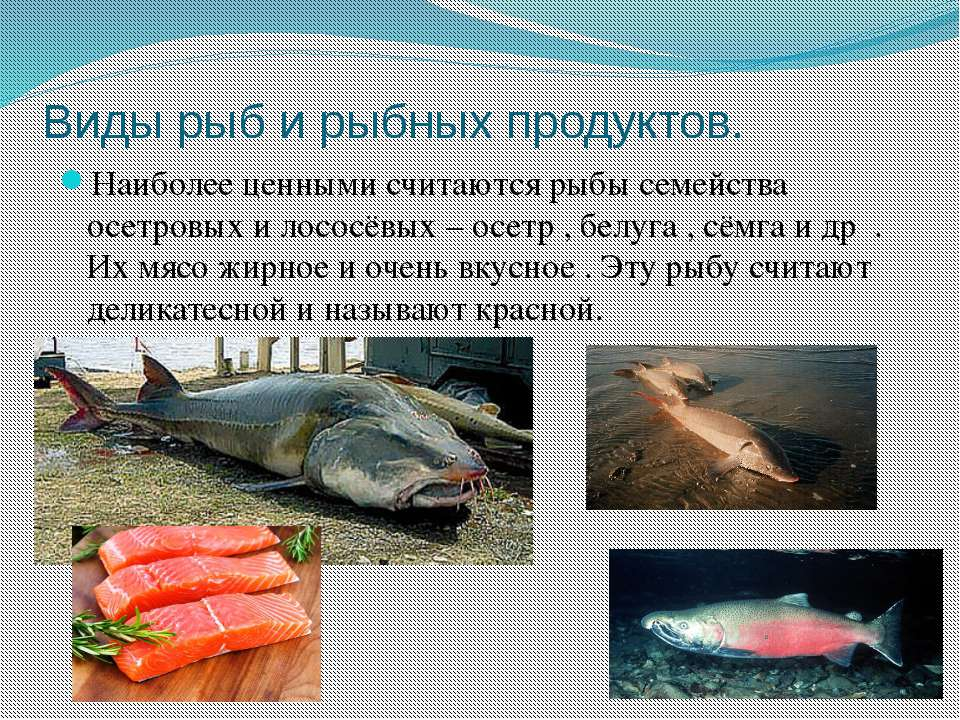 Виды рыб и рыбных продуктов. Наиболее ценными считаются рыбы семейства осетро...