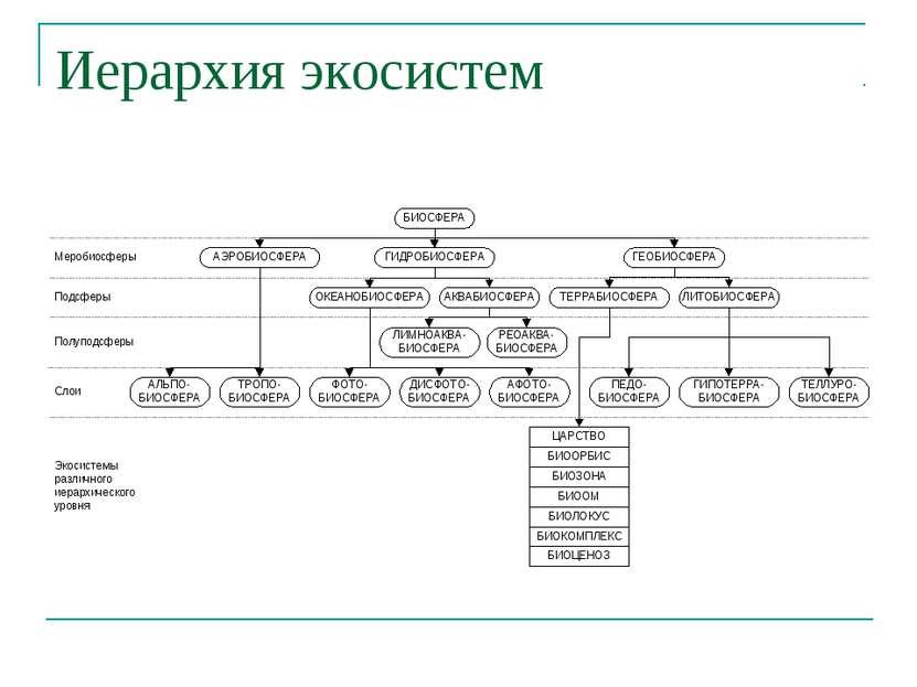 Иерархия экосистем