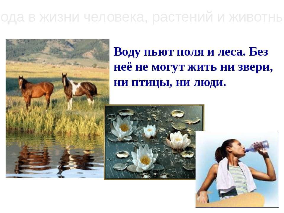 Вода в жизни человека, растений и животных Воду пьют поля и леса. Без неё не ...