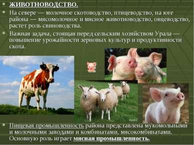 ЖИВОТНОВОДСТВО. На севере— молочное скотоводство, птицеводство, на юге район...