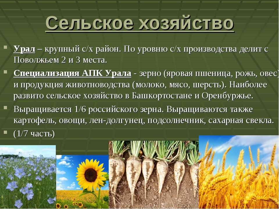 Сельское хозяйство Урал – крупный с/х район. По уровню с/х производства делит...