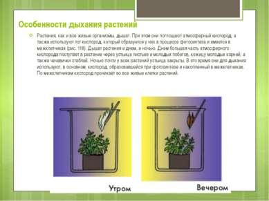 Особенности дыхания растений Растения, как и все живые организмы, дышат. При ...