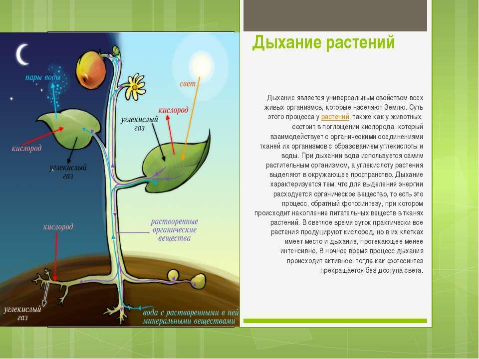 Дыхание растений Дыхание является универсальным свойством всех живых организм...