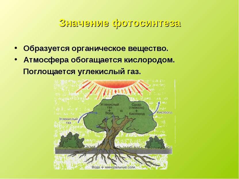 Значение фотосинтеза Образуется органическое вещество. Атмосфера обогащается ...
