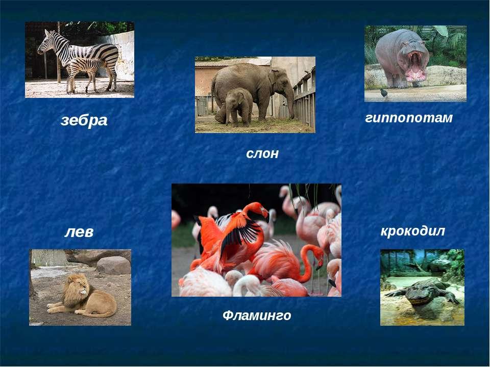 зебра слон гиппопотам лев Фламинго крокодил