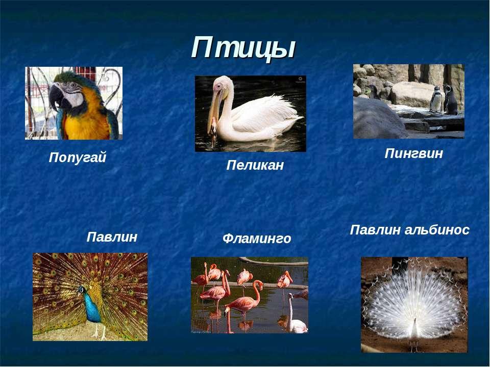 Птицы Попугай Пеликан Пингвин Павлин Павлин альбинос Фламинго