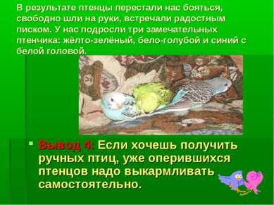 В результате птенцы перестали нас бояться, свободно шли на руки, встречали ра...