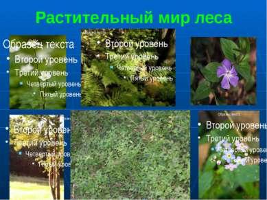 Растительный мир леса