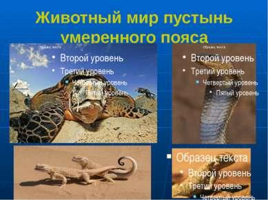 Животный мир пустынь умеренного пояса 1.Черепаха 2.Кобра 3,4. Ушастые круглог...
