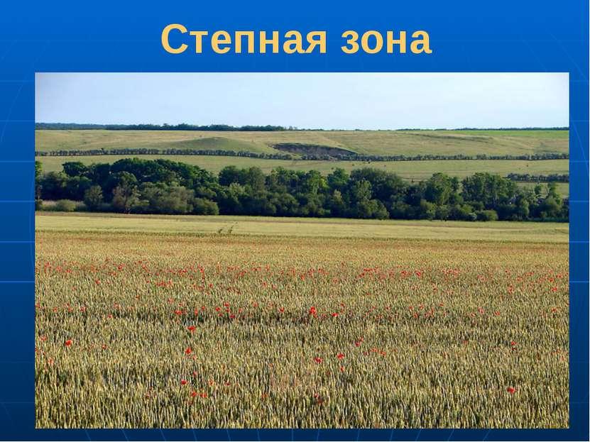 Степная зона Степи – это травяные равнины. Степь – одно из самых благоприятны...