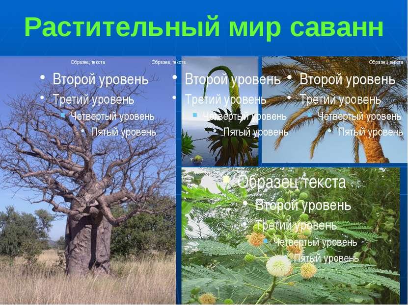Растительный мир саванн 1. Баобаб 2. Агава 3.Пальма 4.Акация