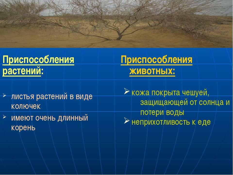 Приспособления растений: листья растений в виде колючек имеют очень длинный к...