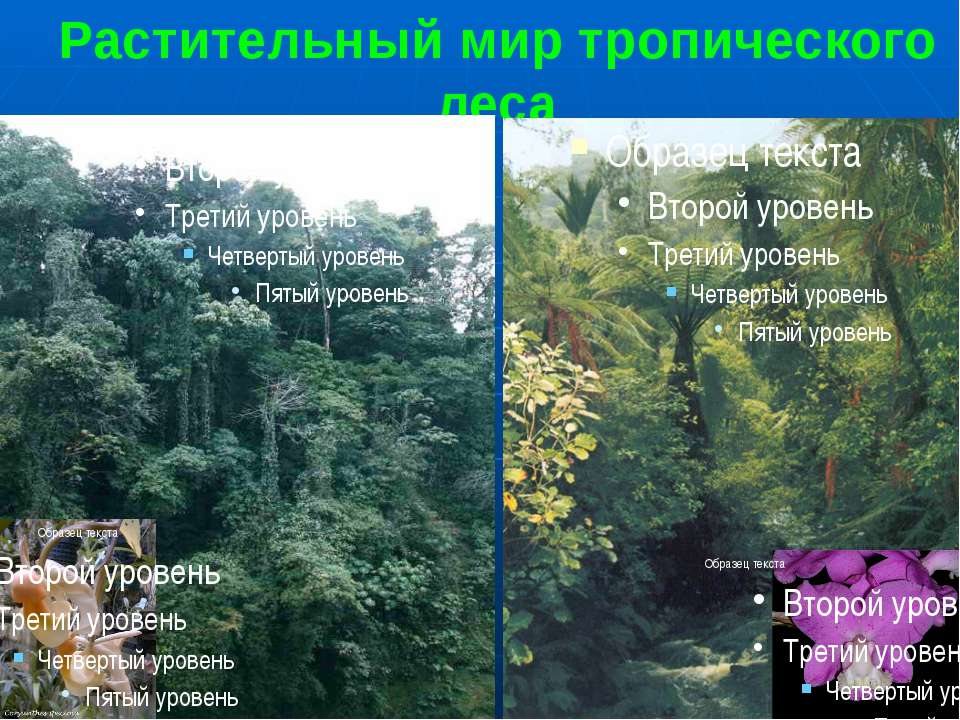 Растительный мир тропического леса 1,2. Многоярусный тропический лес. С высок...
