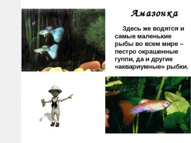 Здесь же водятся и самые маленькие рыбы во всем мире – пестро окрашенные гупп...