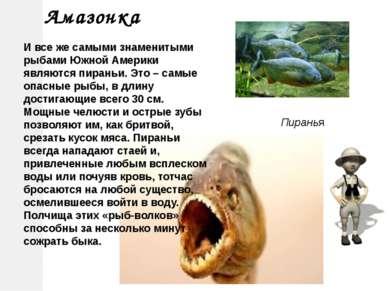 Пиранья Амазонка И все же самыми знаменитыми рыбами Южной Америки являются пи...