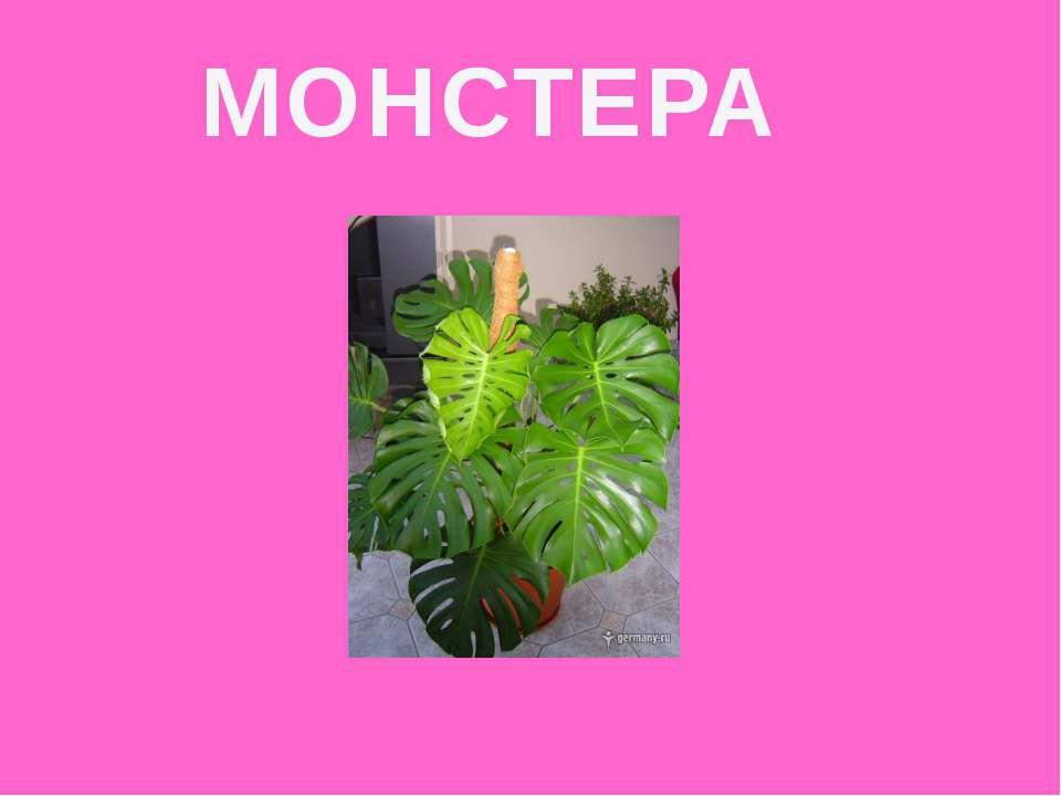 МОНСТЕРА