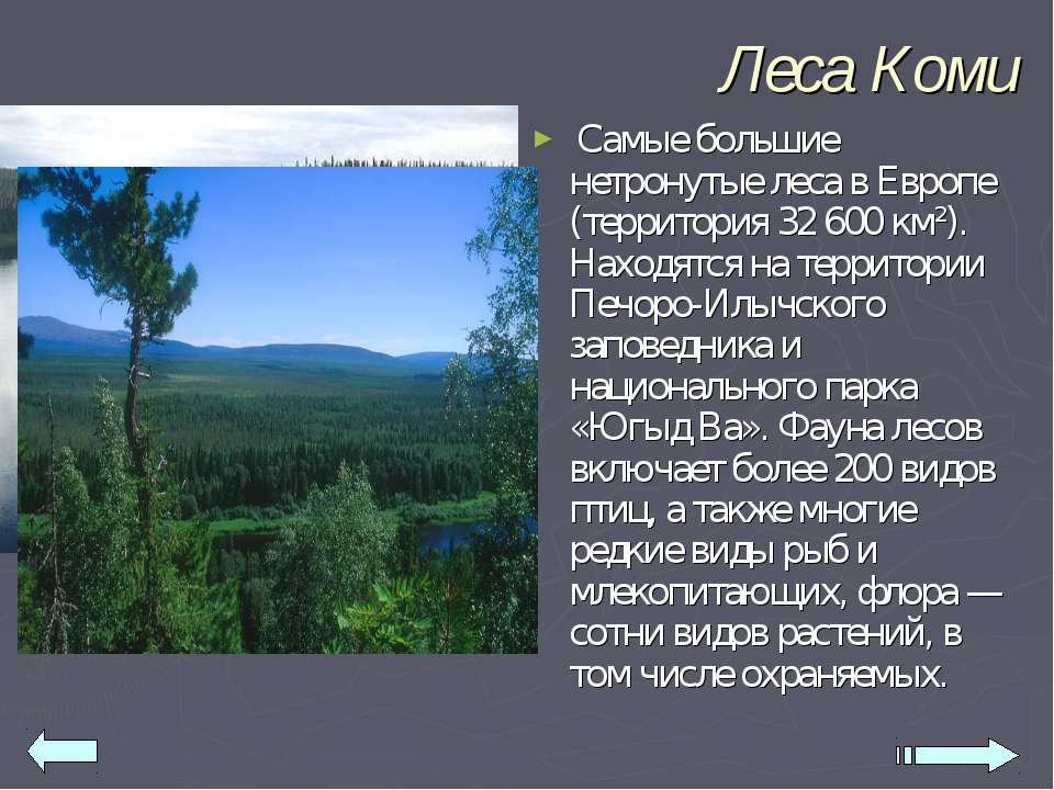 Леса Коми Самые большие нетронутые леса в Европе (территория 32 600 км²). Нах...