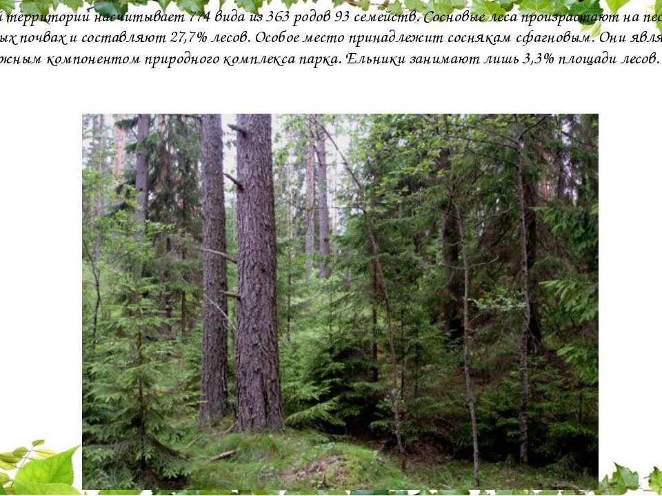 Флора этой территории насчитывает 774 вида из 363 родов 93 семейств. Сосновые...