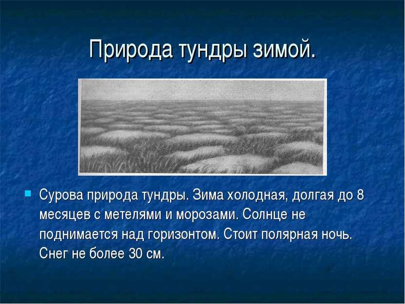 Природа тундры зимой. Сурова природа тундры. Зима холодная, долгая до 8 месяц...