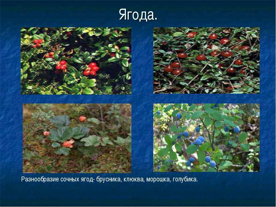 Ягода. Разнообразие сочных ягод- брусника, клюква, морошка, голубика.