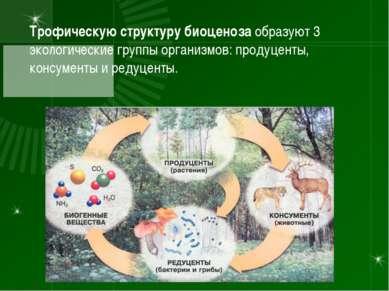 Трофическую структуру биоценоза образуют 3 экологические группы организмов: п...