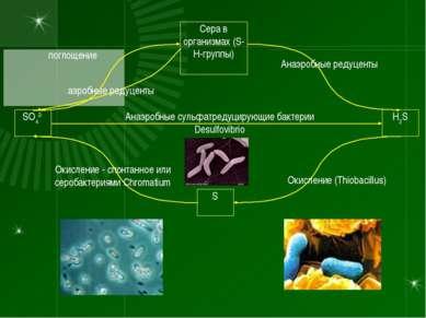 SO42- H2S Сера в организмах (S-H-группы) S Анаэробные сульфатредуцирующие бак...