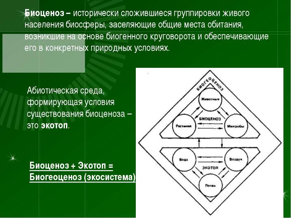 Биоценоз – исторически сложившиеся группировки живого населения биосферы, зас...