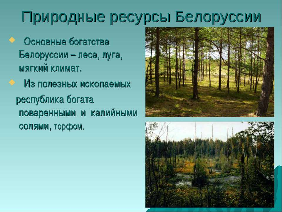 Природные ресурсы Белоруссии Основные богатства Белоруссии – леса, луга, мягк...