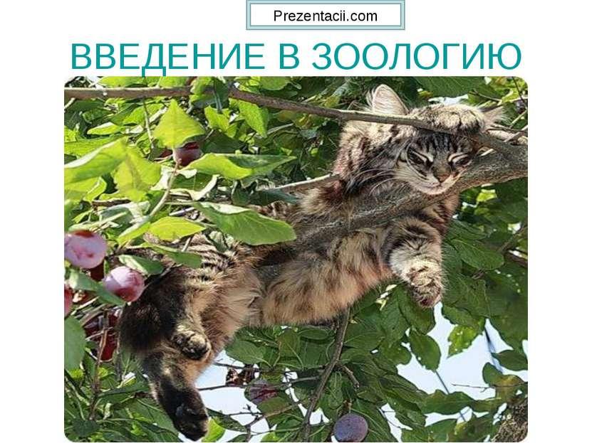 ВВЕДЕНИЕ В ЗООЛОГИЮ Prezentacii.com