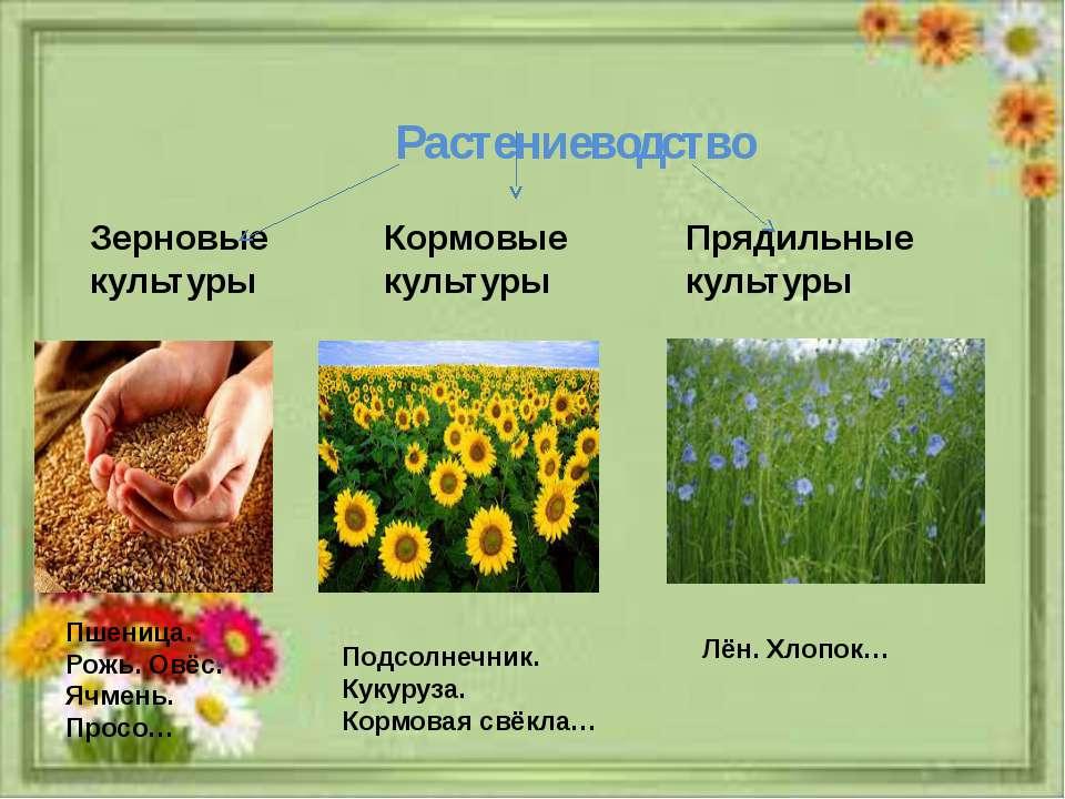Растениеводство Зерновые культуры Кормовые культуры Прядильные культуры Пшени...